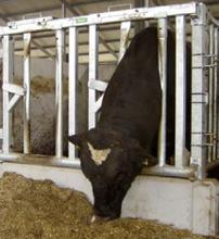 Veiligheidsvoerhek voor (dek)stier 185 cm, 2 vreetplaatsen